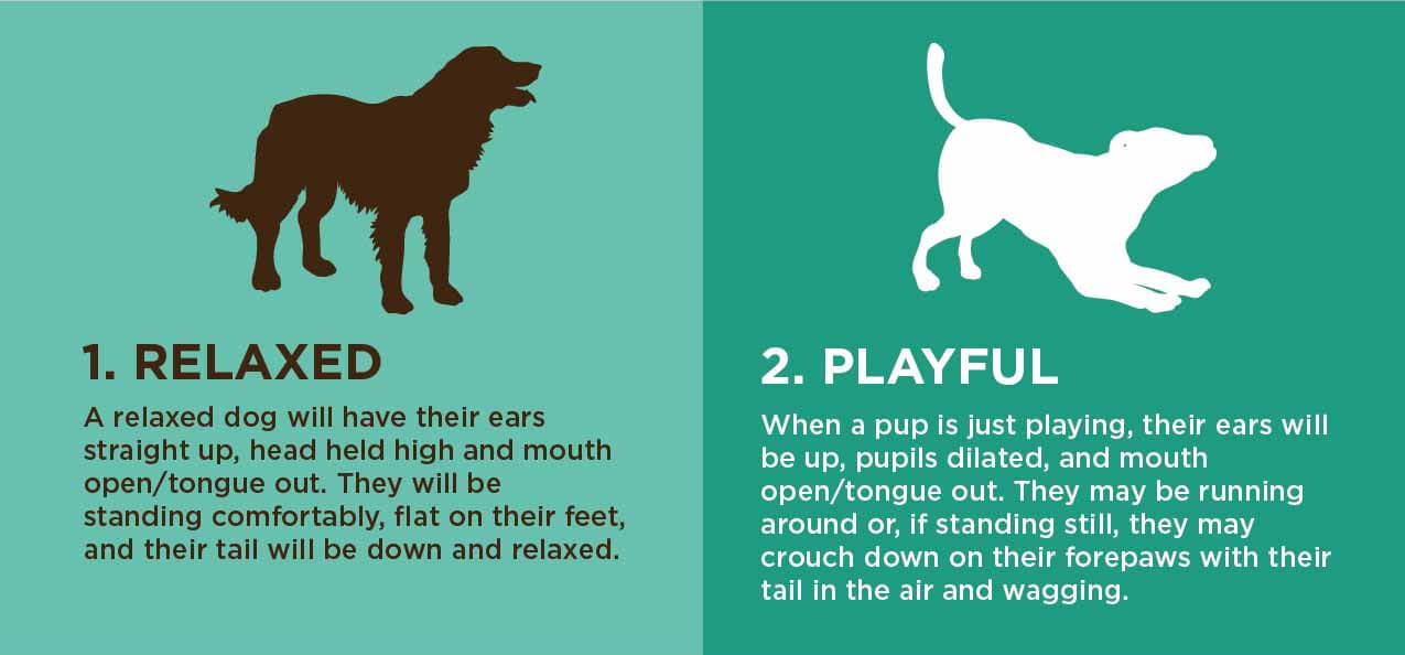 How To Read A Dog's Body Language 1 & 2